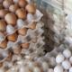 واردات تخم مرغ