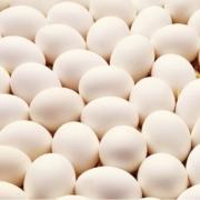مراحل تبدیل تخم مرغ به جوجه