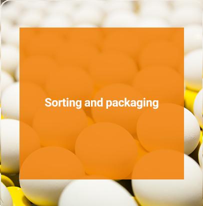 Telavang's Sorting and packaging