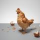 اول مرغ بود یا تخم مرغ؟